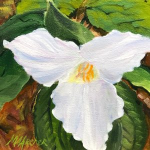 Trillium Solo Painting | Oil Painting | Mary Ann Archer